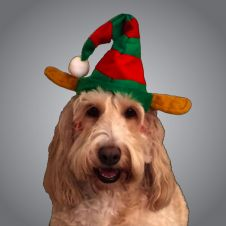 Deluxe Pet Elf Hat with Velcro