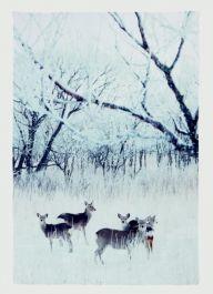 Premier Deer In Snowy Meadow - 210x145
