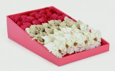 Premier Mix Poinsettia Clip - White & Red