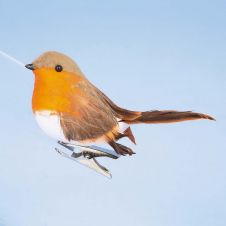 Premier Robin On Clip